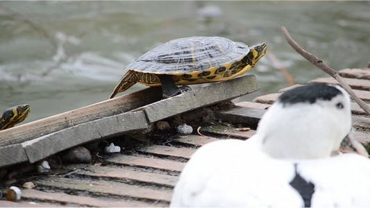 Thumbnail for Turtle 3
