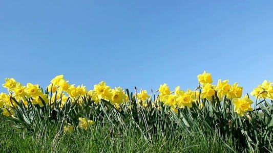 Thumbnail for Springtime Flowers