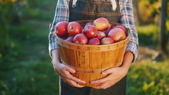 Thumbnail for A Farmer Holds a Basket with Ripe Red Apples