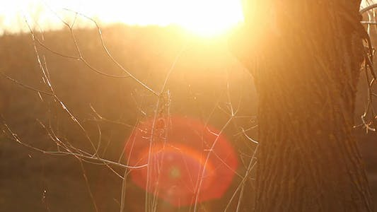 Thumbnail for Tree And Sunshine Lens Flare