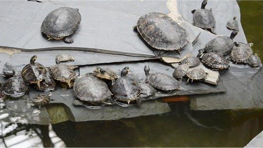 Thumbnail for Turtle 4