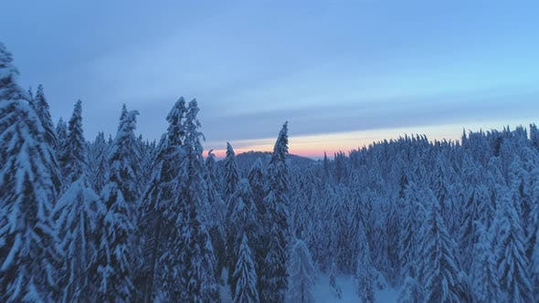 Thumbnail for Aerial drone view of sunset snow covered forest trees and sunrise.