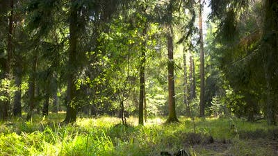 A Forest on a Sunny Day