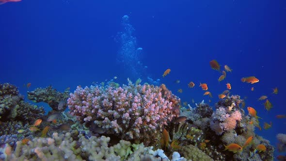 Thumbnail for Underwater Coral Garden