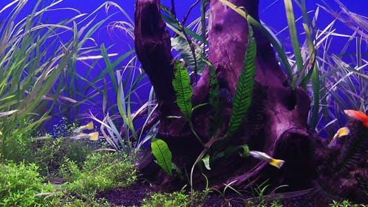 Cover Image for Aquarium
