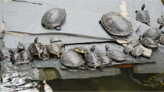 Thumbnail for Turtle 6