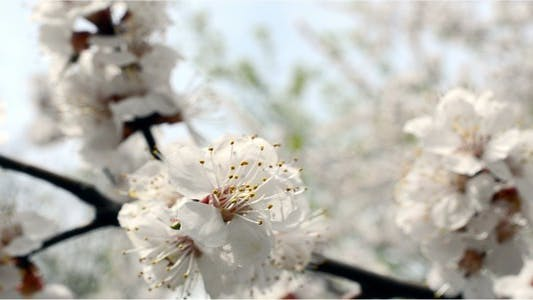 Thumbnail for Flower 8