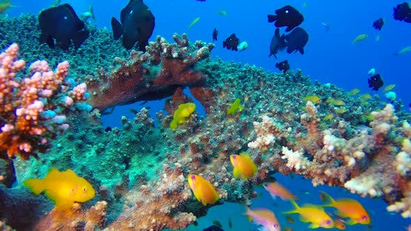 Thumbnail for Beautiful Underwater Colorful Tropical Fishes