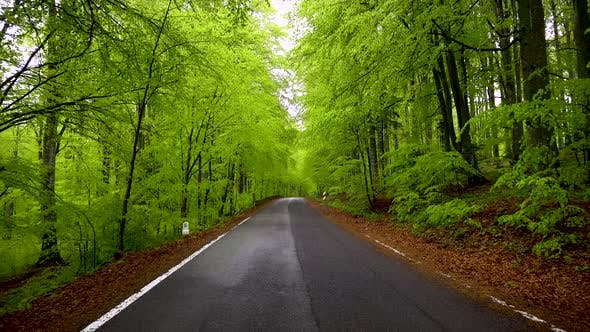 Thumbnail for Empty road in a green spring forest. Asphalt countryside road of a mountain forest.