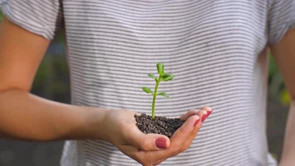 Thumbnail for Hands Protecting Small Plant
