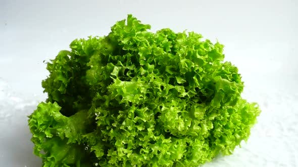 Thumbnail for Washing of Lettuce Leaves 11
