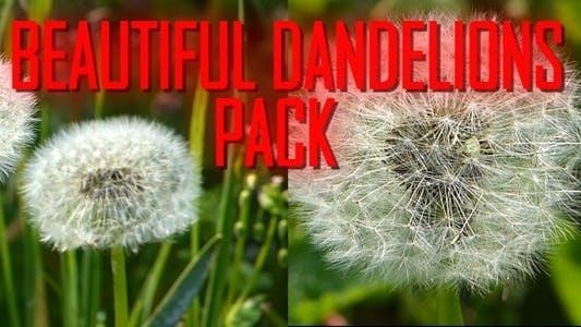 Thumbnail for Beautiful Dandelions Pack
