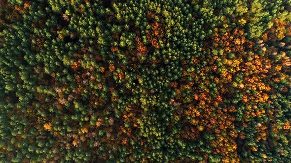 Thumbnail for Autumn forest, aerial zoom-in