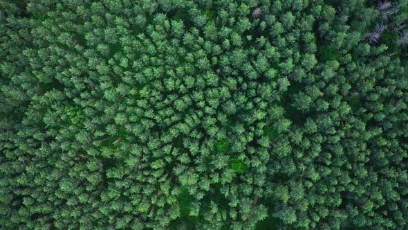 Cover Image for Aerial View Treetops In The Forest
