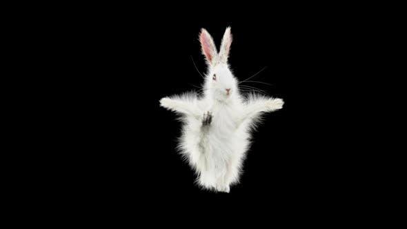 Thumbnail for Kaninchen tanzen HD