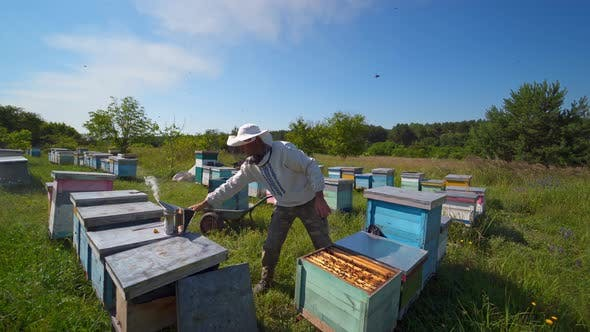 Thumbnail for Beekeeping process among nature