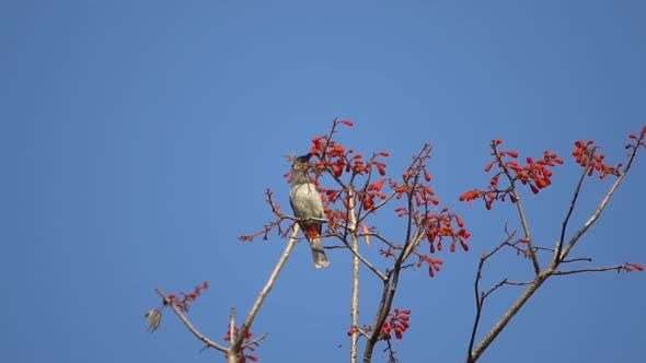 wild animals, birds living on the tree, red flower forest tree cover, slow-motion shot