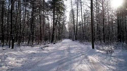 The Road in Winter Forest
