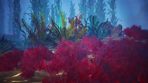 Underwater Coral Reef with Sun Rays