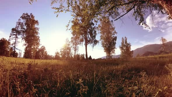 Thumbnail for Sunny Rural Meadow at Mountain Landscape with Green Grass, Trees and Sun Rays. Diagonal Movement