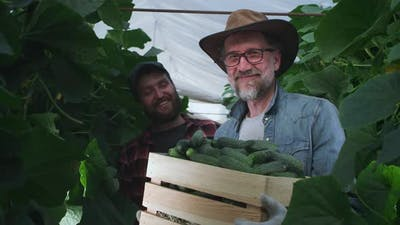 Happy Farmers Showing Box of Cucumbers