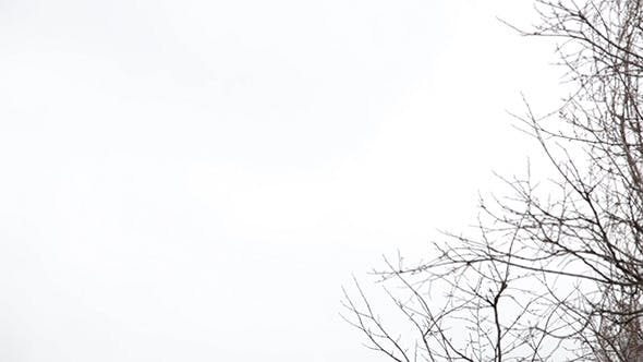 Thumbnail for Tree Branches on the Background of White Sky