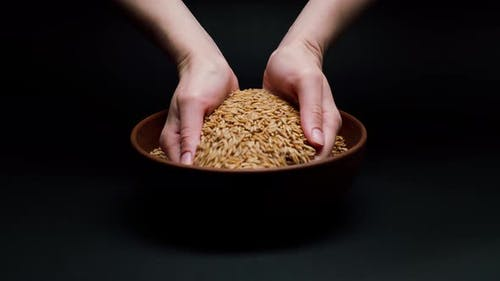 Taking Barley in Hands From Bowl and Pouring on Black Background