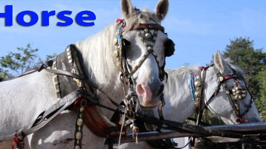 Thumbnail for Horses