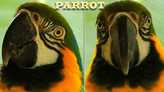 Cover Image for Parrot