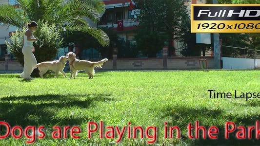 Thumbnail for Dogs Are Playing in the Park