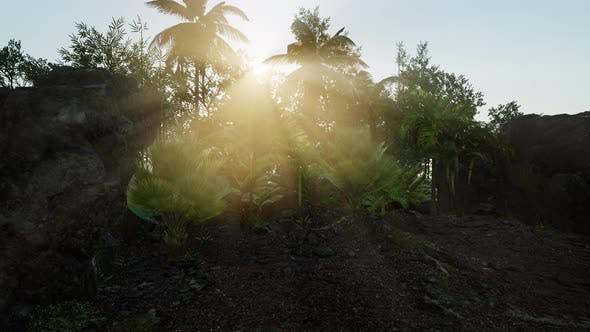 Sun Beams of Light Penetrating Dense Lush Green Canopy