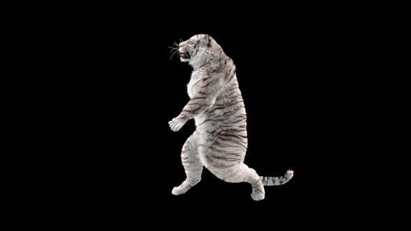 Thumbnail for White Tiger HD