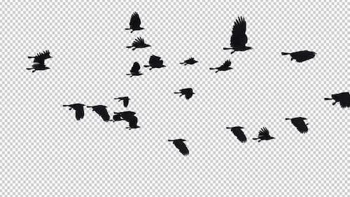 22 schwarze Vögel - Fliegende Transition I