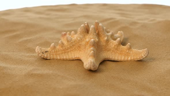 Thumbnail for Starfish on Sand, White, Rotation, Closeup