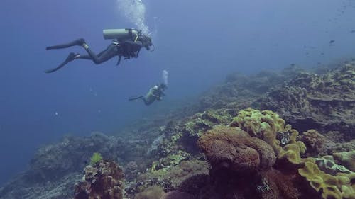 Scuba Diver Diving Underwater Blue Sea Over Beautiful Coral Reef and Fish. Divers Swimming