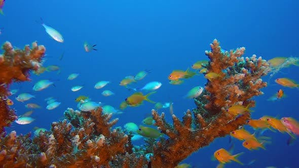 Thumbnail for Underwater Colorful Tropical