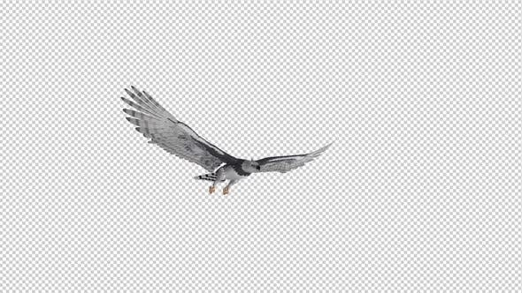 Thumbnail for Harpy Eagle - Flying Loop - Side Angle