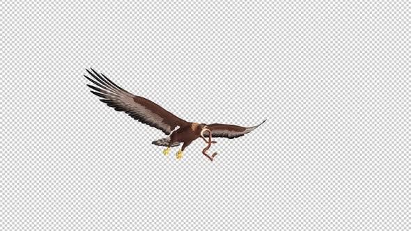 Golden Eagle With Snake - Flying Loop - Side Angle