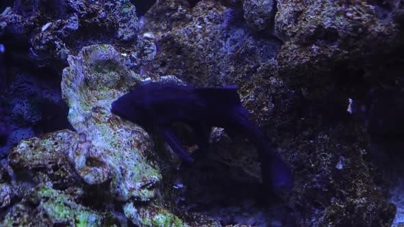 Fish Aquarium Cleaners