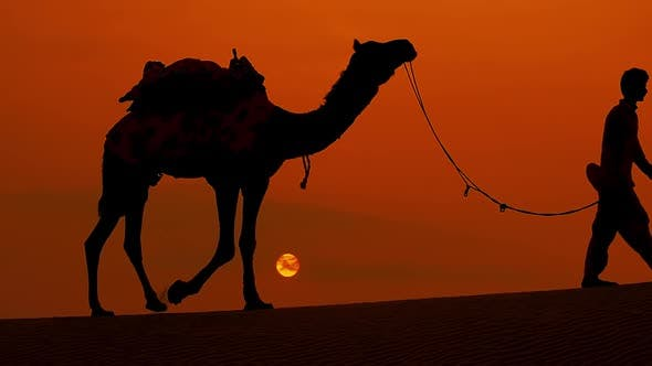 Thumbnail for Cameleers, Camel Drivers at Sunset