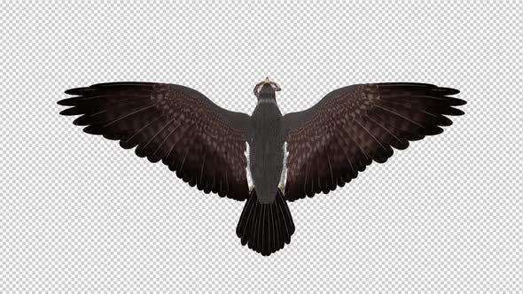 Snake Eagle with Serpent - Flying Loop - Back View