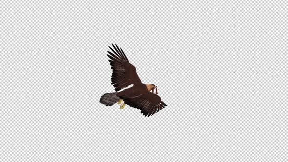 Golden Eagle With Snake - Flying Loop - Back Angle