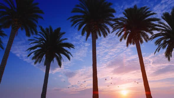 Thumbnail for Driving Under Palm Trees In Sunset With Birds