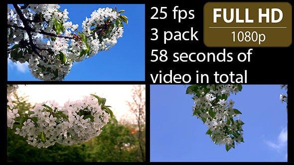 Thumbnail for Cherry Tree Flower (3-Pack)