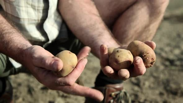 Thumbnail for Farmer holding potatoes, close up