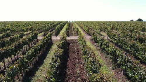 Viticulture in Autumn