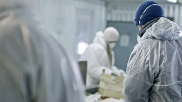 Thumbnail for Workers of Garbage Recycling Factory Sorting Waste