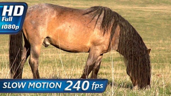Thumbnail for Beautiful Horse