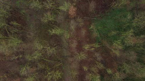 Aerial view flowing over an empty almost dead leafless forest with hight different colored trees