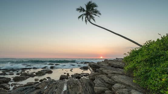 Thumbnail for Timelapse View of Palm Trees and Indian Ocean Coastline During Sunrise. Island Sri Lanka.